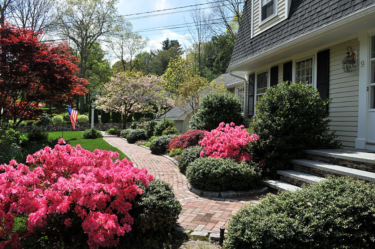 Azalea bushes add a splash of hot pink to the front of a home. Project by Ahronian Landscaping and Design