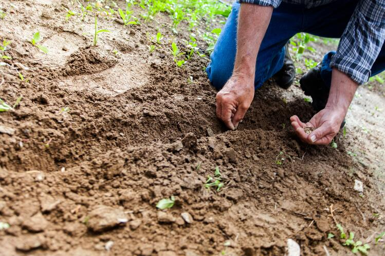 Check existing soil conditions