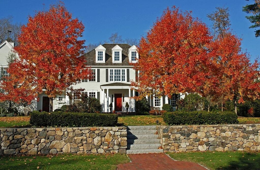 Maple trees, Woodbury Gray granite steps and New England Style wallstone